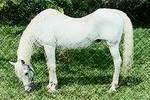 horse_swayback