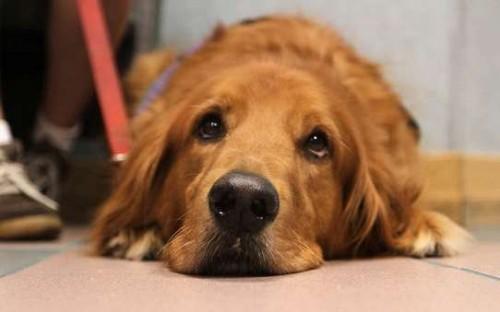 Gillespie The Dog