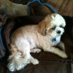 Oliver in travel bag