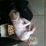Oliver on bag