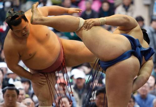 thong_sumo