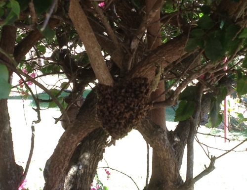 beehive_crop