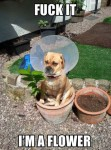 Cone of Shame Classic – Flower Pot Dog