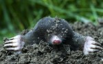Dealing with moles
