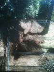 Curved trench (taken thru screen)