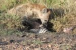 Kenya Safari: The animals we saw - and saw killed